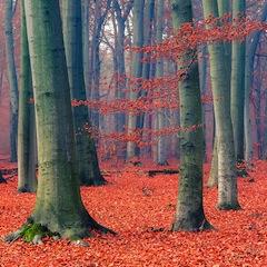 treesorangeleaves_152564651